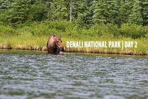 Denali National Park | Day Two